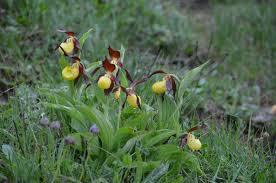 Orchidée Vic Bilh